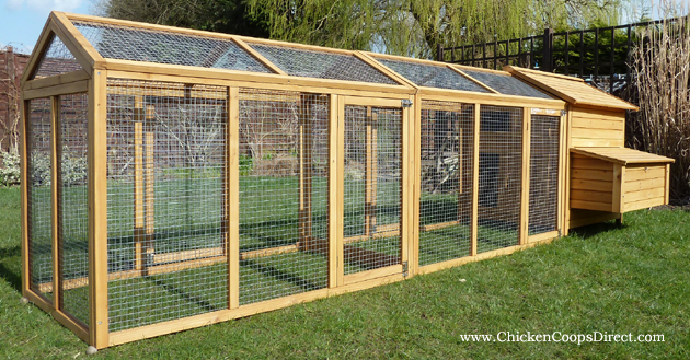 Large Run For Chicken Coop
