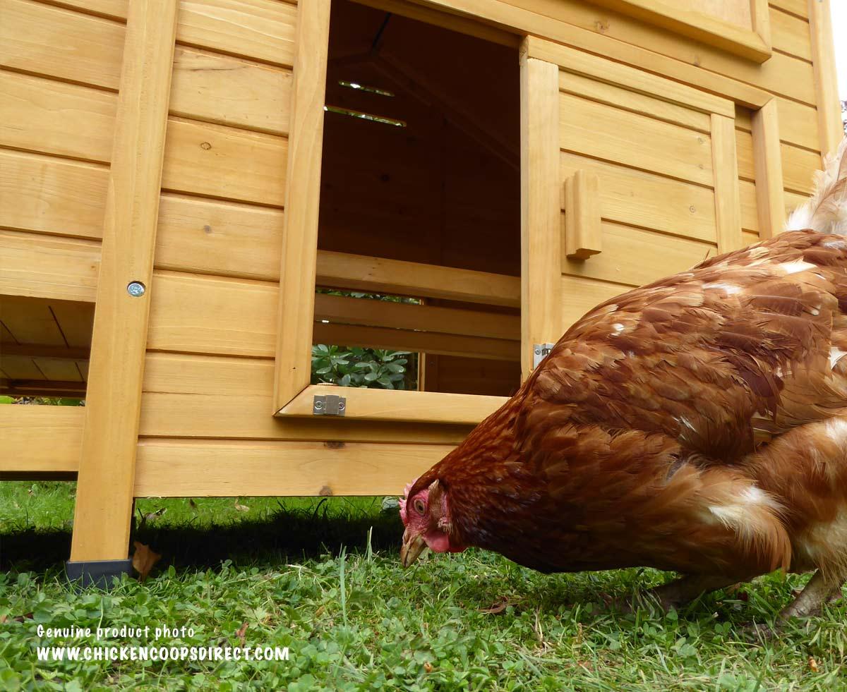 The Devon hen house is raised off the ground